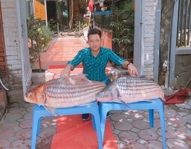 Cặp cá trà sóc nặng gần 1 tạ bắt từ Campuchia đưa về Hà Nội - ảnh 1