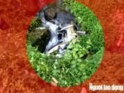 Tin tức trong ngày - Xe khách lấn làn, ép xe máy rơi xuống đèo Bảo Lộc