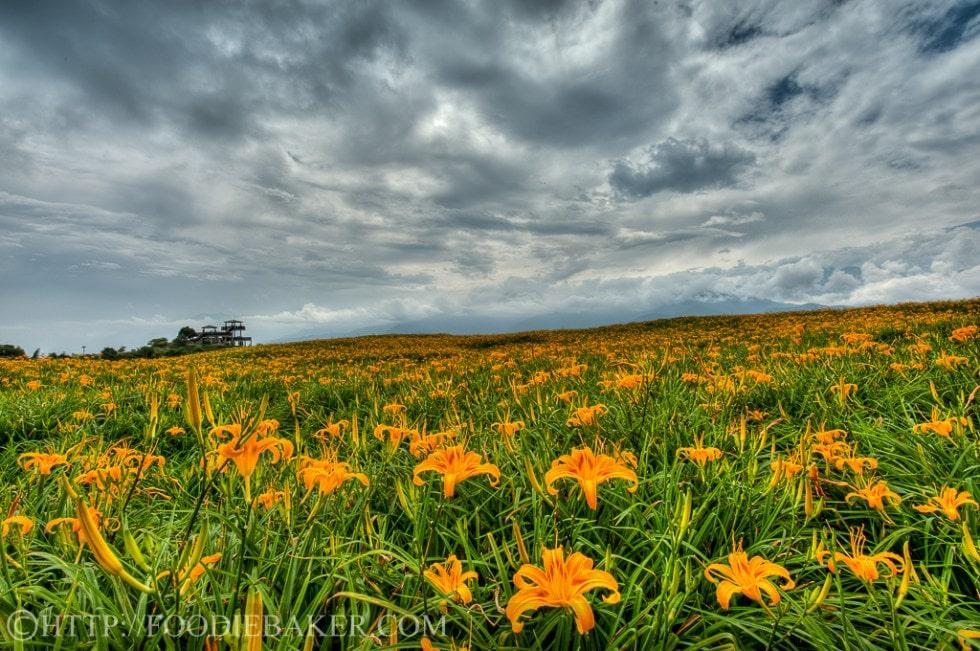 Choáng ngợp lễ hội hoa lily lớn nhất hành tinh - 1