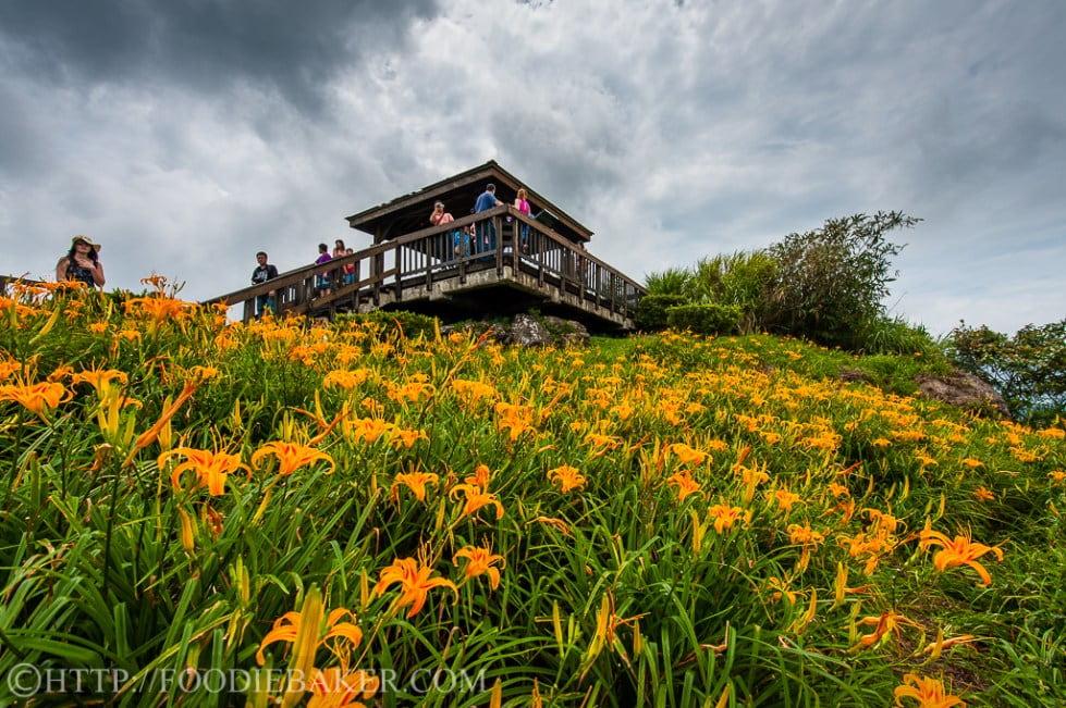 Choáng ngợp lễ hội hoa lily lớn nhất hành tinh - 3