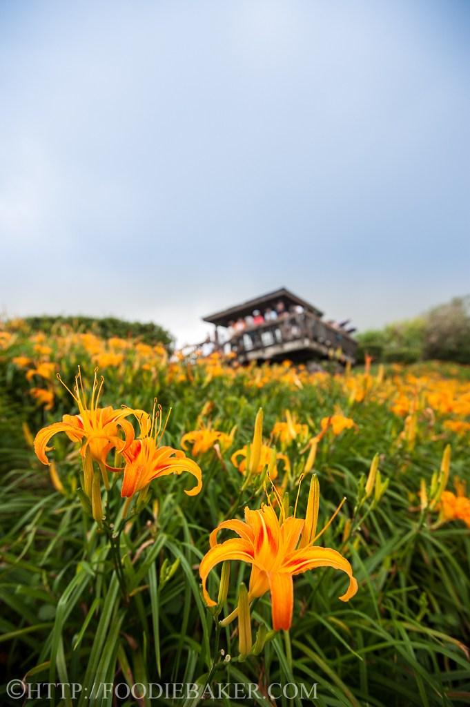 Choáng ngợp lễ hội hoa lily lớn nhất hành tinh - 8