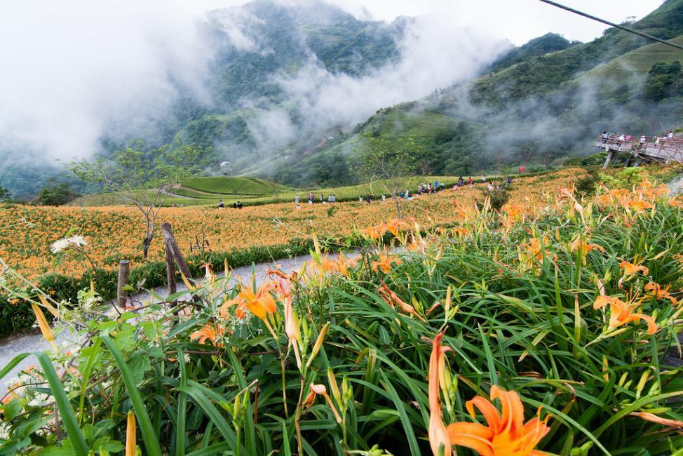Choáng ngợp lễ hội hoa lily lớn nhất hành tinh - 11