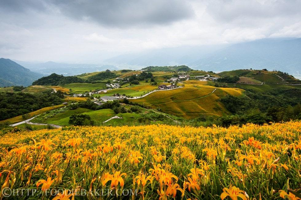 Choáng ngợp lễ hội hoa lily lớn nhất hành tinh - 7