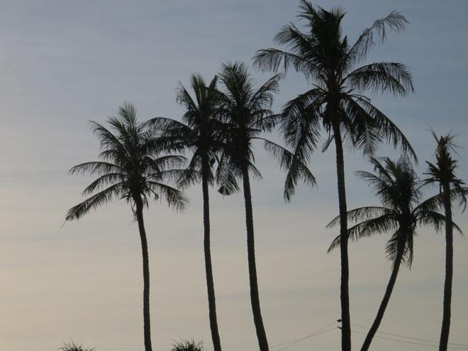 Check-in ngay 15 địa điểm sống ảo cực chất trên đảo Lý Sơn - 21