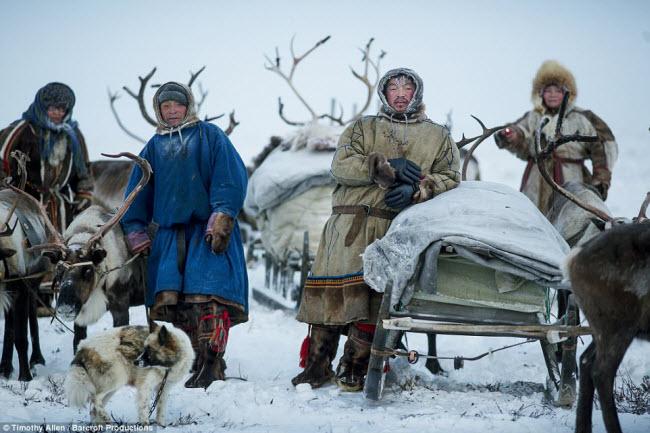 Nhiếp ảnh gia động vật hoang dã Timothy Allen của hãng tin BBC đã dành 16 ngày tham gia hành trình di cư dài 800km cùng các thành viên của bộ lạc du cư Nenets tại vùng Yamal-Nenets ở Siberia, Nga.