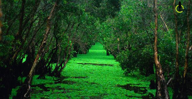 Mùa này về miền Tây ghé rừng tràm Trà Sư là nhất - 3
