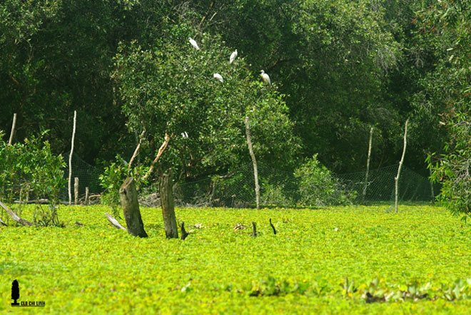 Mùa này về miền Tây ghé rừng tràm Trà Sư là nhất - 4