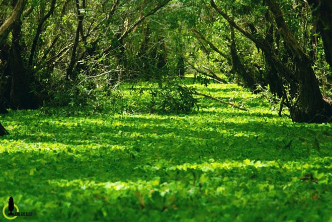Mùa này về miền Tây ghé rừng tràm Trà Sư là nhất - 8