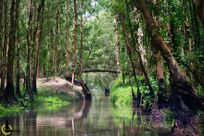 Mùa này về miền Tây ghé rừng tràm Trà Sư là nhất - 15