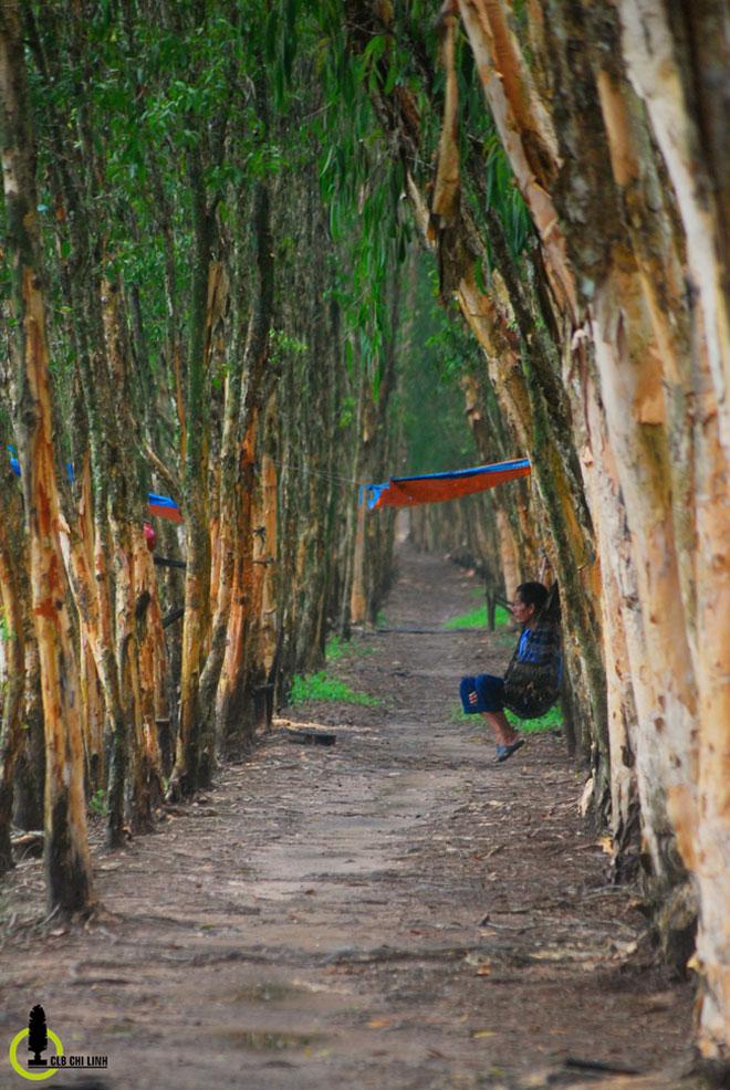 Mùa này về miền Tây ghé rừng tràm Trà Sư là nhất - 13