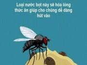 Điều gì sẽ xảy ra khi ruồi đậu vào thức ăn?