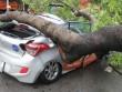 Cụ  cây đè bẹp ô tô giữa trung tâm Sài Gòn, cô gái nguy kịch