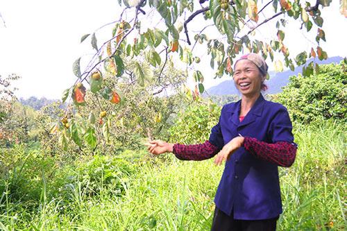 Tương lai không có để ăn - đặc sản hồng không hạt Bảo Lâm, Lạng Sơn - 2