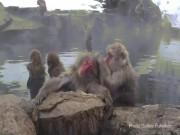 """Đột nhập  """" vương quốc """"  khỉ mặt đỏ, tròn mắt xem khỉ tắm"""