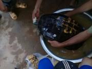Tưởng rùa  khủng  là con ngan, gọi cả xóm ra xem và cái kết bất ngờ