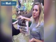 Cô gái xinh đẹp bị voi vít đầu vì xin kiểu ảnh