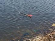 Phát hiện người đàn ông nổi trên mặt nước trong tư thế úp mặt