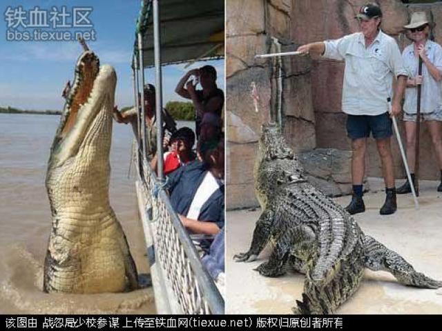 Nghề mới tại Trung Quốc: Chạy bộ cùng người lạ - 4