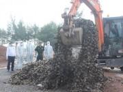 Thị trường - Tiêu dùng - Quảng Ninh: Tiêu hủy 10 tấn hàu giống nhập lậu từ Trung Quốc