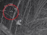 Đặt camera trong rừng, phát hiện thứ không thể giải thích