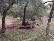 An ninh Xã hội - Phát hiện thi thể nghi bị chết cháy trong rừng dương