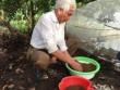 Hải Phòng:  Độc chiêu  nuôi ếch trong... màn