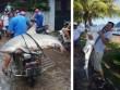 Nóng trong tuần: Người dân câu được cá mập  khủng  ở Hạ Long