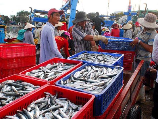 Báo động nguy cơ hải sản Việt bị phạt thẻ đỏ - 1