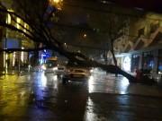Tin tức trong ngày - Sài Gòn mưa to, đường ngập, cây đổ chiều cuối tuần
