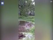 Thế giới - Ném chó mèo sống xuống hồ cho cá sấu đớp ở Colombia