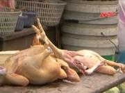 """Video An ninh - Rợn người công nghệ """"nhồi"""" hóa chất nhuộm vải vào vật nuôi"""