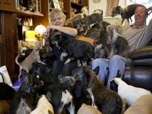 Phi thường - kỳ quặc - Cặp vợ chồng già sống chung với 41 chú chó