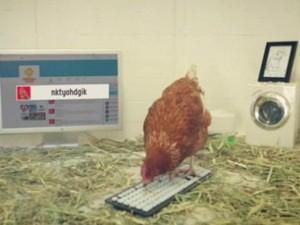 """Phi thường - kỳ quặc - Video: """"Cô gà mái"""" đầu tiên trên thế giới làm giám đốc"""