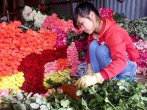 Thị trường - Tiêu dùng - Hoa hồng Đà Lạt tăng giá gấp 3-4 lần trước ngày 20.10