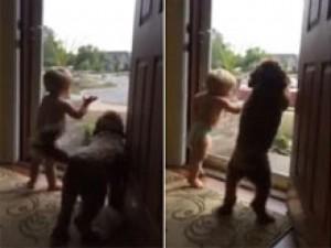 Bạn trẻ - Cuộc sống - Clip: Bé và chó nhảy sung sướng khi thấy bố về