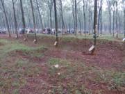 An ninh Xã hội - Nam thanh niên bị đâm chết trong lô cao su