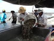 """Giá cả - Nông, thủy sản """"hụt"""" hàng tỉ USD"""