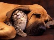 Bạn trẻ - Cuộc sống - Clip: Những màn ngủ gật yêu không cưỡng nổi của thú cưng