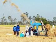Thị trường - Tiêu dùng - Gạo Việt biến mất trên thị trường hội nhập