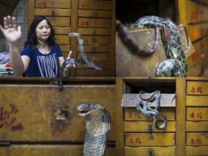 Phi thường - kỳ quặc - Khám phá những cửa hàng rắn truyền thống ở Hồng Kông
