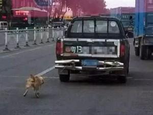 Thế giới - Phẫn nộ cảnh chú chó bị xe tải kéo lê đến chết ở TQ