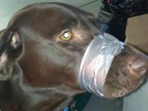 Thế giới - Mỹ: Dùng băng dính dán mõm chó, đối mặt án 150 ngày giam