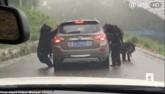 4 gấu đen lực lưỡng đứng thẳng chặn xe du khách ở TQ