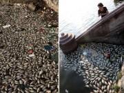 Tin tức trong ngày - Hà Nội lên phương án cứu cá Hồ Tây