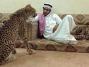 Thế giới - Giới siêu giàu Ả Rập khoe đẳng cấp, báo săn chết hàng loạt