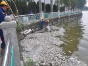 Tin tức trong ngày - Nguyên nhân cá chết trắng Hồ Tây: Chờ 1 tuần