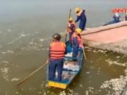Video An ninh - Hiện tượng lạ: Cá chết hàng loạt trắng xóa Hồ Tây