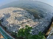 Tin tức trong ngày - Cá chết ở Hồ Tây: Dân bịt mũi, quán đóng cửa vì mùi hôi thối