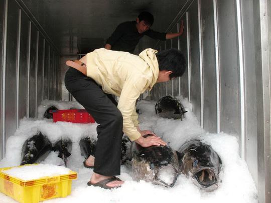 Xuất khẩu cá ngừ sang Trung Quốc tăng vọt - 1