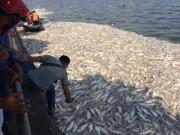 Tin tức trong ngày - Cá Hồ Tây chết hàng loạt: Xác định có 24 cửa xả xuống hồ